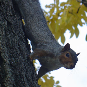 Squirrel Park in Umag